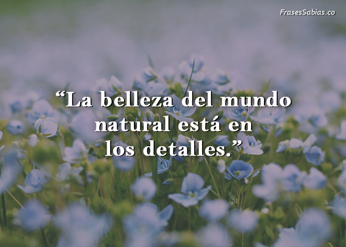 frase de la belleza de la naturaleza esta en los detalles