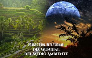 frases para reflexionar por el día mundial del medio ambiente