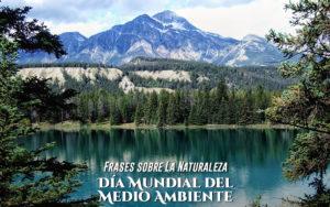 Frases sobre la Naturaleza ✨🍃 | Día Mundial del Medio Ambiente 🌱